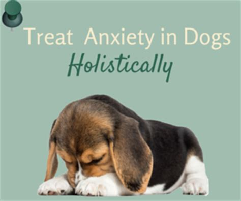 Detox Steroids For Dogs by Detox How To Detoxify Your