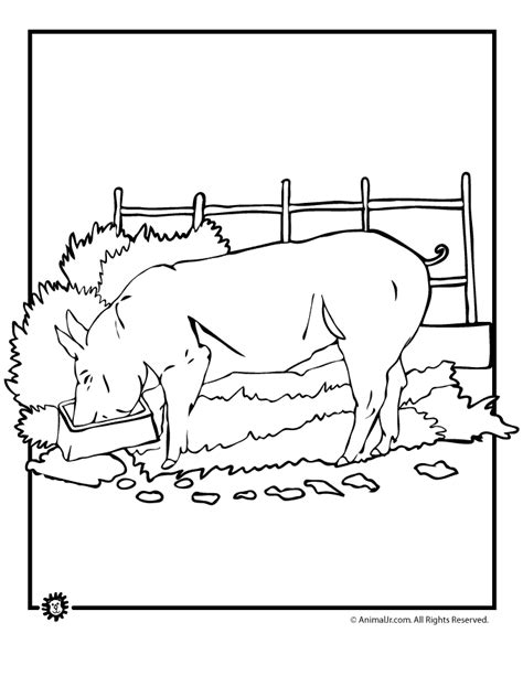 farm pig coloring page realistic pig coloring page woo jr kids activities
