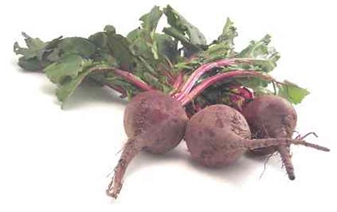 pungent root vegetable cook s thesaurus roots