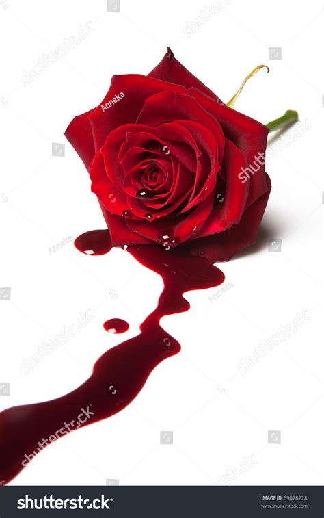 red rose blood flowing out heart stock photo 69028228