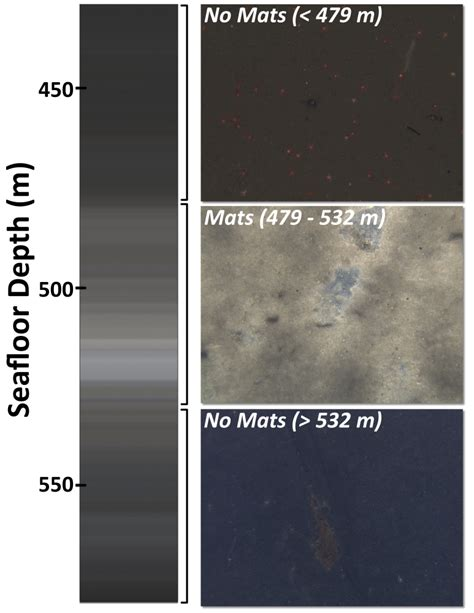 Ucsb Mat by Sea Bacterial Takeover The Ucsb Current