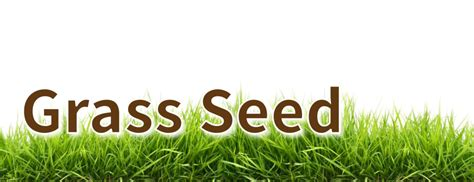 grass seed jamestown feed and seed