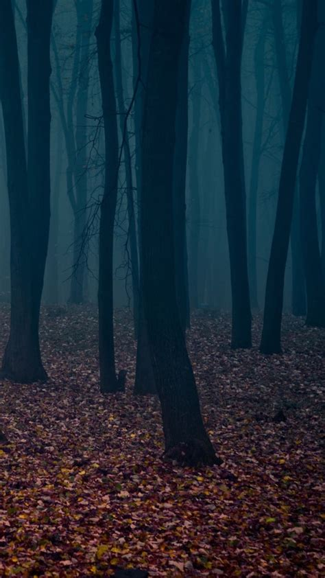wallpaper iphone 6 forest spooky autumn forest leafbed iphone 6 plus hd wallpaper hd