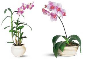 7 indoor plants that purify the air around you naturally