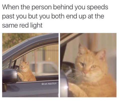cat memes   super relatable
