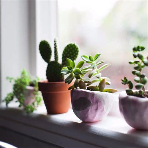 bunny succulents popsugar home
