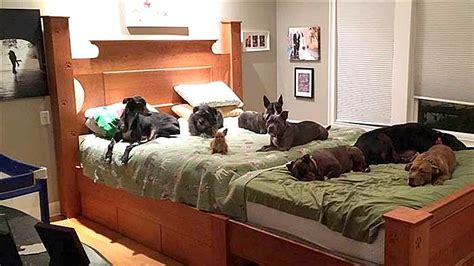 mom and dads bedroom king size wasn t big enough for eight dogs so mom and dad