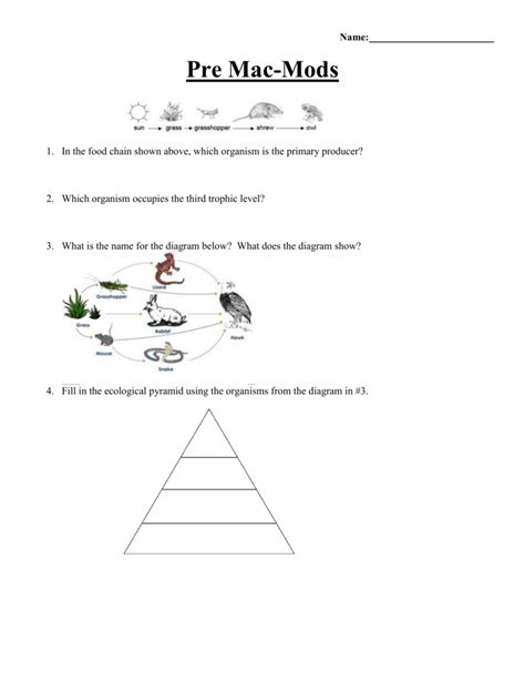 Food Chain Trophic Levels Worksheet Answers by Uncategorized Trophic Levels Worksheet Klimttreeoflife