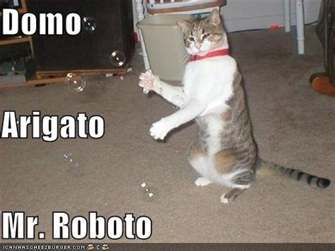 Domo Meme - domo arigato mr roboto lollocaust pinterest