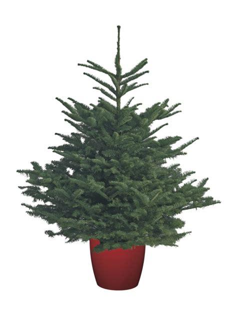 best 28 grow me christmas tree they grow christmas