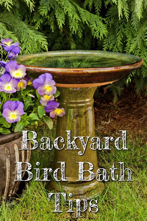 backyard bird bath tips do you need a bird bath in your