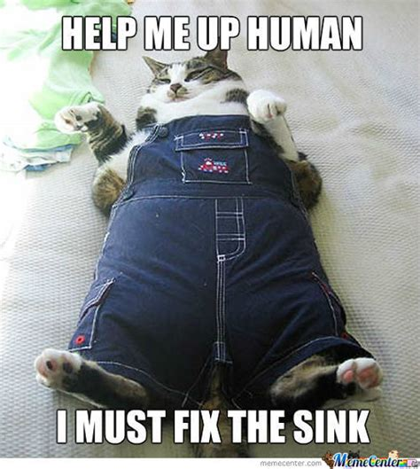 Funny Fat Cat Memes - fat cat memes best collection of funny fat cat pictures