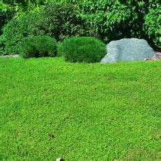 1000 ideas about grass alternative on pinterest lawn