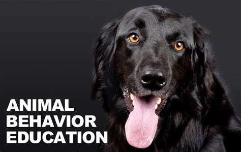 excessive barking understanding excessive barking from your learning about animal behavior