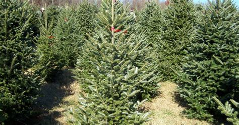 map where to cut down your christmas tree near pittsburgh