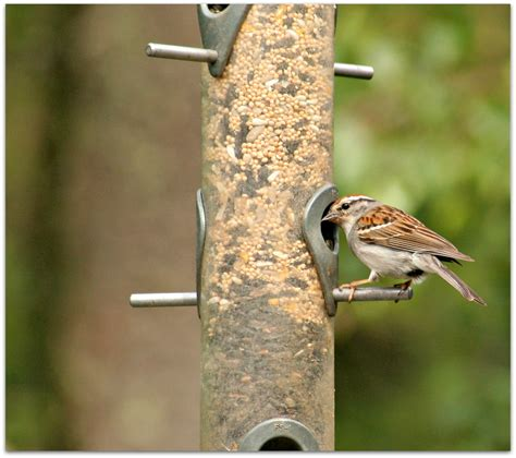 bird seed for sparrows bird cages