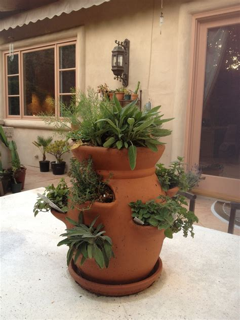 mini herb garden pinterest