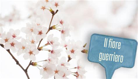 fiore di ciliegio significato linguaggio dei fiori fiore di ciliegio portafortuna per