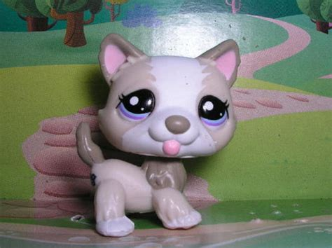 lps husky puppy other collectable toys littlest pet shop husky puppy 1817 was sold for r25 00