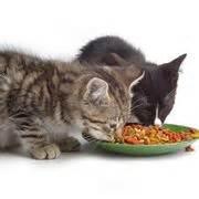 alimentazione gatti piccoli cibo gatti