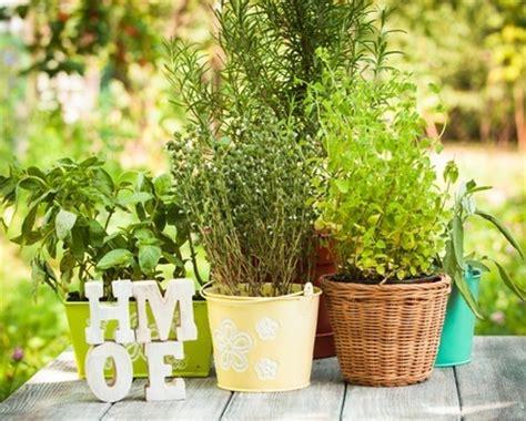 grow culinary herbs   home herb garden