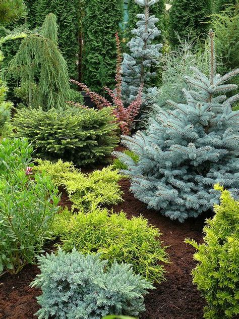 Evergreen Landscaping Ideas Beautiful Conifer Garden So Many Different Colors And Presentations Trees Shrubs Pinterest