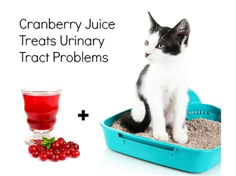can dogs cranberry juice 14 home remedies for pets some pets
