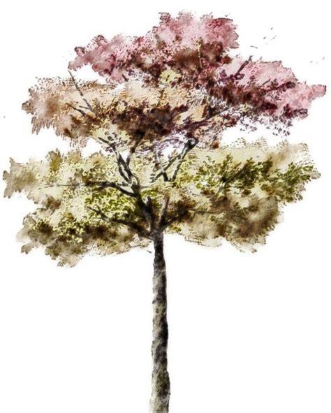 baum architektur architectural rendering 3d rendering trees architecture