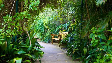 Sunken Gardens St Petersburg by Sunken Gardens St Petersburg Florida Attraction