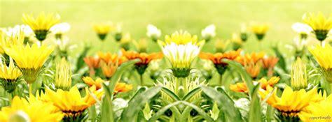 fiori gialli selvatici copertine fiori selvatici gialli