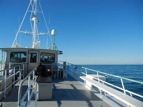 fishing boat trip galveston 4 hour fishing trip review of galveston party boats