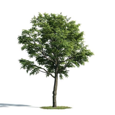 tree 2 am171 archmodels max c4d obj fbx 3d model