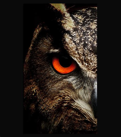 wallpaper iphone owl night owl hd wallpaper for your mobile phone