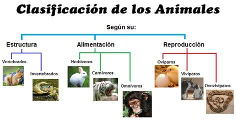 imagenes de animales por su alimentacion animalia clasificaci 243 n de los animales