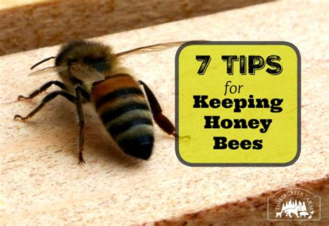 Or 7 Tips On Keeping It by Best Tips For Keeping Honey Bees Timber Creek Farm