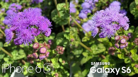 samsung galaxy   iphone  camera comparison