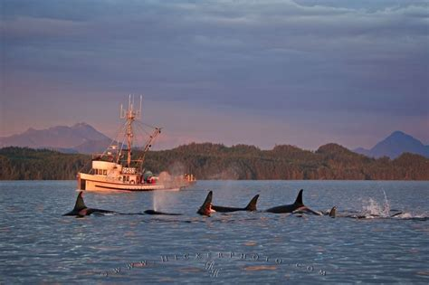 free boats on vancouver island fishing boat orca pod vancouver island photo information