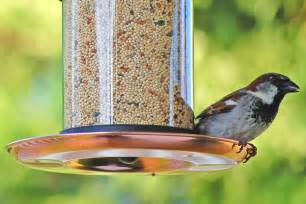 attract birds to a new bird feeder