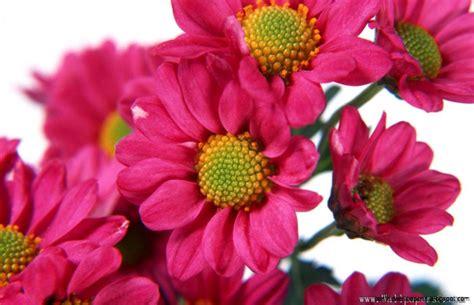 wallpaper flower image free download beautiful flower hd wallpapers download