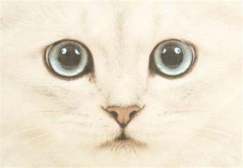imagenes hipster gatos osico tumblr