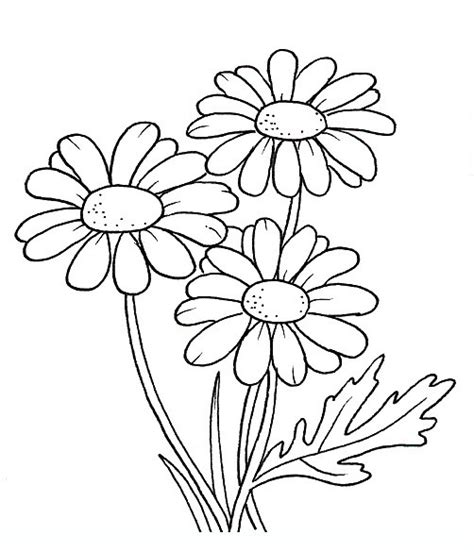 free coloring pages daisy flower daisy flowers coloring pages