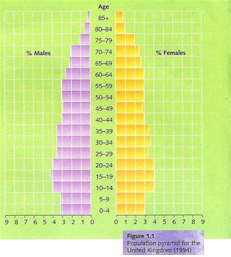 How To Make A Population Pyramid On Paper - report on worldwide population growth assignment point