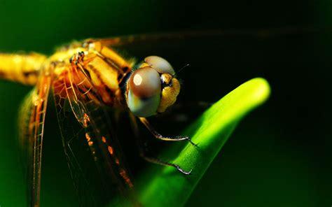 Home Design 3d Para Windows Xp dragonfly close up micro hd desktop wallpaper animal