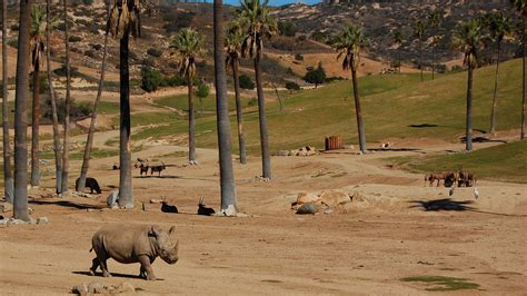 best safari park best european tours our family trip at aitana safari park