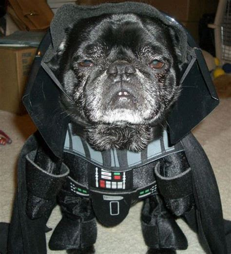 pug vader awesome animal costumes