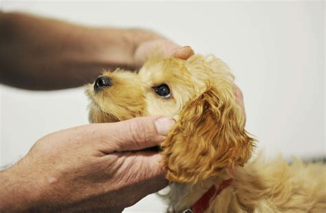 puppy health puppy sidmouth veterinary practice
