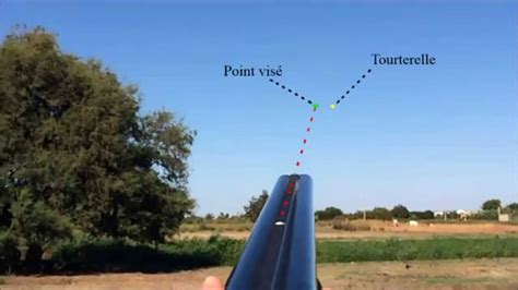 how to a to dove hunt dove motion dove