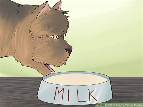 feeding a yorkie how to feed a yorkie puppy 11 steps with pictures wikihow
