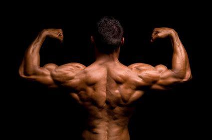 muscler dos exercices et programme de musculation