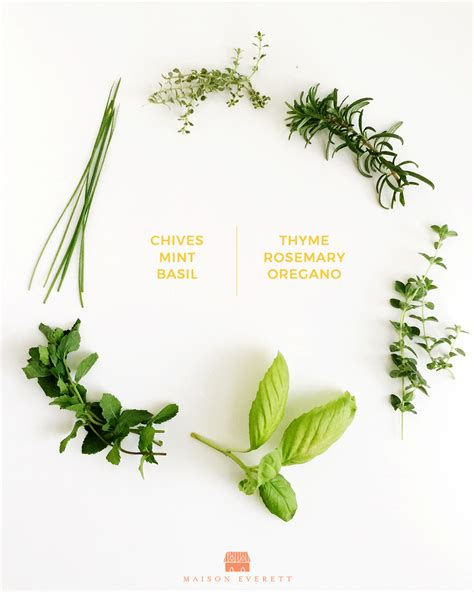 herbs indoors 6 beneficial herbs to grow indoors this fall